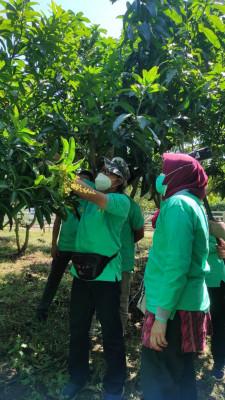 Teknologi UHDP Perkuat Kampung Hortikultura